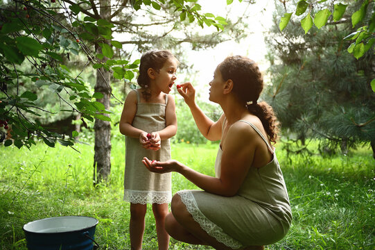 Adorable mother feeds her daughter with plucked cherries in the garden. Mom and daughter dress the same when picking cherries in summer