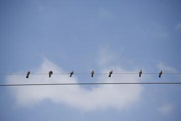 Fototapeta Gołębie siedzące na drutach na tle nieba obraz