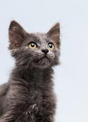 kitten looks sideways