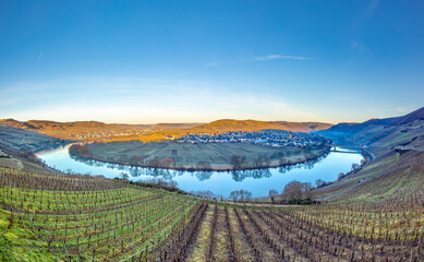 Fototapeta scenic moselle river loop with village Trittenheim seen from Leiwen obraz