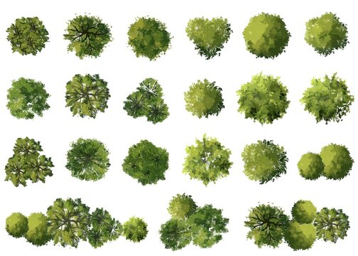 vector watercolor tree top view isolated on white background  for landscape plan and architecture layout drawing, elements for environment and garden,green grass
