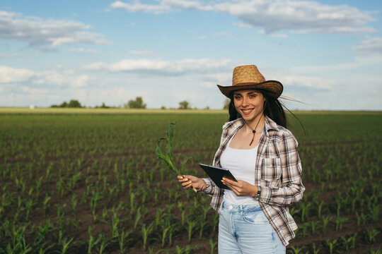 woman farmer standing in corn filed and examining corn