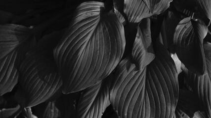 Obraz Nature structures - fototapety do salonu
