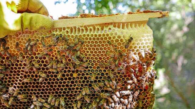 hive with breeding bees for the honey production