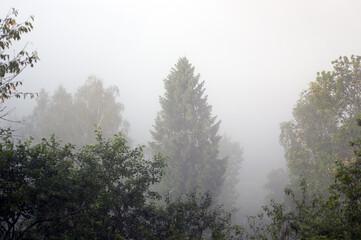 Polana spowita mgłą po wschodzie słońca