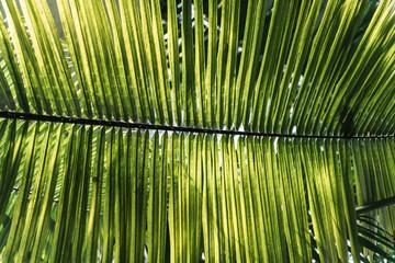 Obraz Liść palmowy - las tropikalny w Brazylii - fototapety do salonu