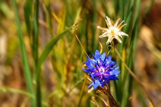 Flowers in the La Pinilla Reservoir, in the Community of Madrid, Spain
