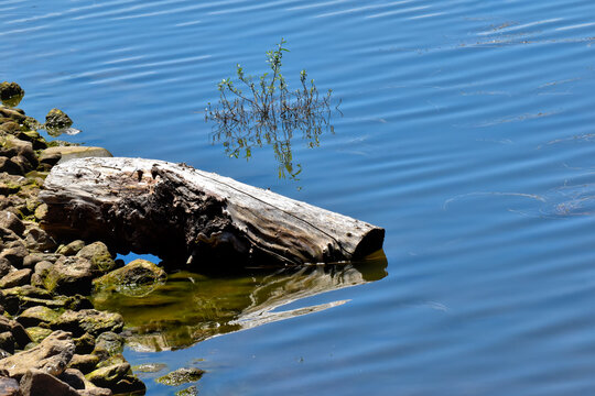 Reflections of a wooden log, in the blue waters of the La Pinilla Reservoir, in the Community of Madrid, Spain