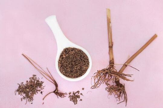 Valerian herb root used in herbal medicine as a tranquilliser, treats insomnia, anxiety, headaches, digestive problems, menopause symptoms and fatigue. Flat lay on mottled pink. Valeriana officinalis.