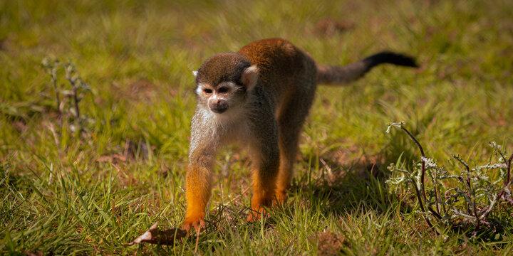 monkey on the grass