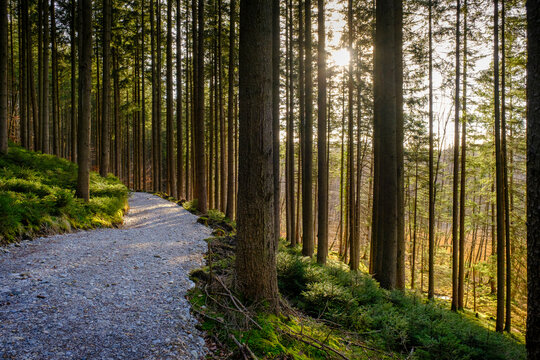 Footpath amidst tree trunk in forest