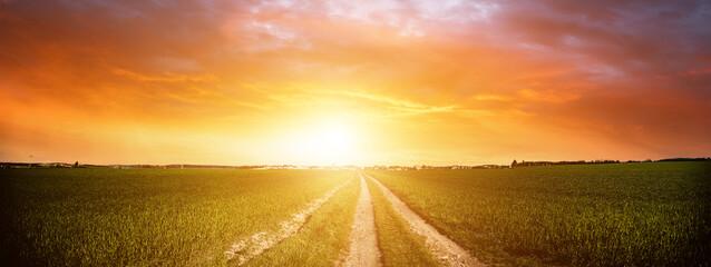 Fototapeta Panorama of green field with dirt road and sunset sky. Summer rural landscape sunrise obraz