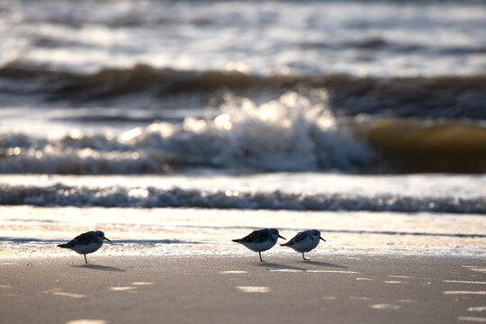birds on sand beach at sea storm