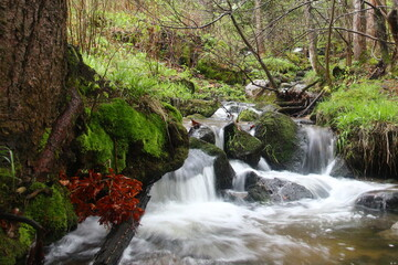 Fototapeta leśny potok Karpacz obraz