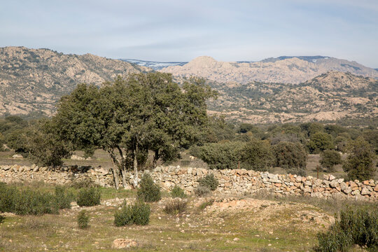 Trees and Stone Wall in Guadarrama National Park; Madrid