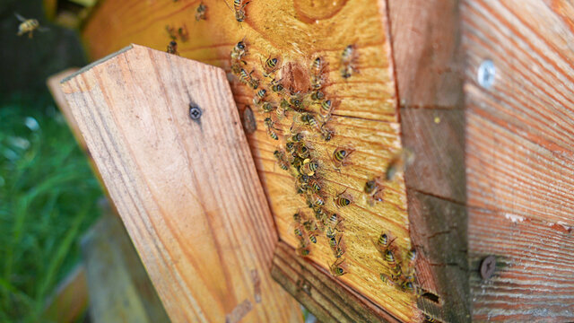 farming of wooden hive with bee colony