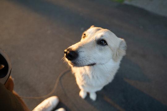 Beautiful portrait of a dog sitting close-up