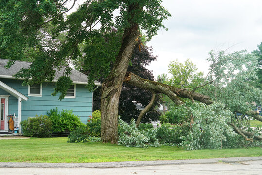 fallen tree in the storm in the yard