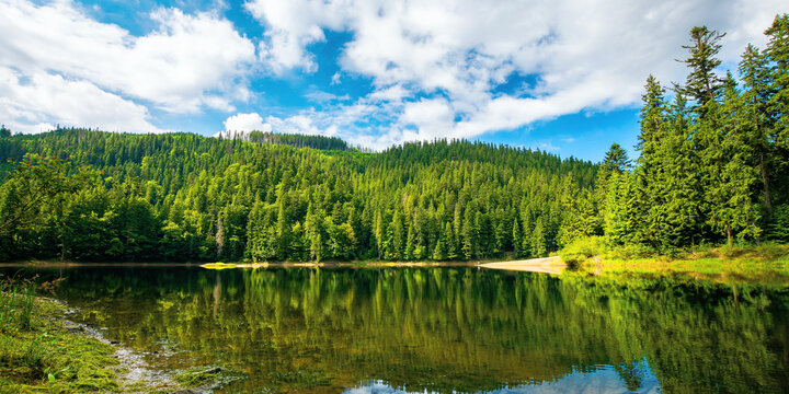 lake among spruce forest. trees reflecting on the water surface. wonderful summer scenery on a bright sunny day with fluffy clouds on the sky