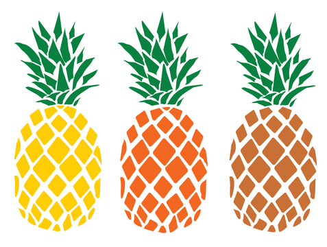 Colorful tropical fruit pineapples