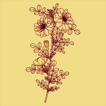 Hand drawn of Vintage plant Free download It`s perfect for fabrics, t-shirts, mugs, decals, pillows, logo, social media pattern and much more!
