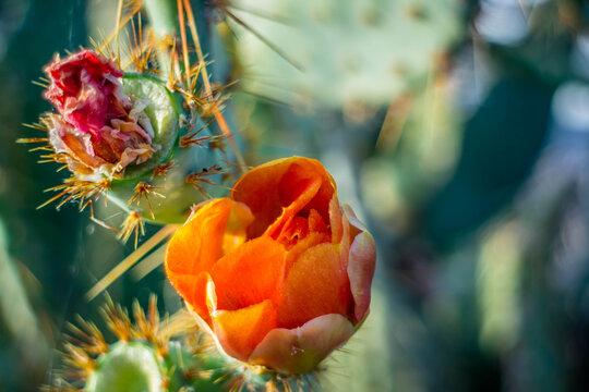 A long slender spiny cactus in Yuma, Arizona