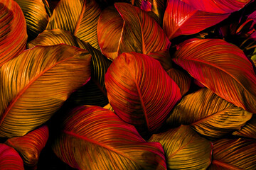 Fototapeta closeup nature view of red leaves background, abstract leaf texture obraz