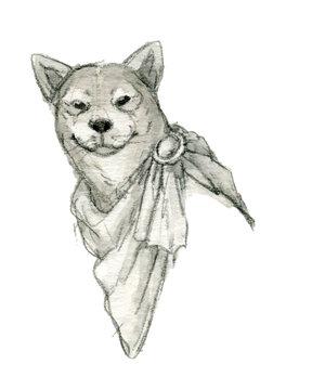 マントを着た柴犬