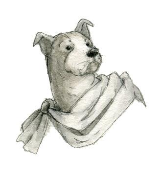 マントを着たボクサー犬