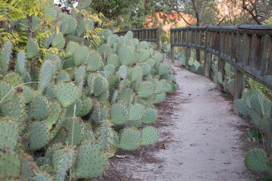 Cactus and Path, Dehesa de la Villa Park; Madrid
