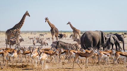 Wild animals congregate around a waterhole in Etosha National Park, northern Namibia, Africa.