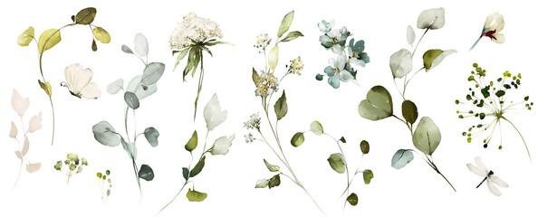 Fototapeta Set watercolor herbal elements of wild  flowers, leaves, branches, Botanic  illustration isolated on white background.  eucalyptus obraz