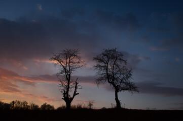 Obraz Dwa drzewa - fototapety do salonu