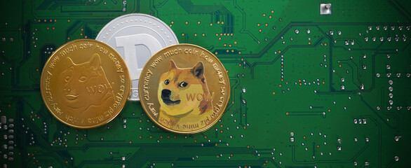 Obraz Golden dogecoin coins. Cryptocurrency dogecoin. Doge cryptocurrency. - fototapety do salonu