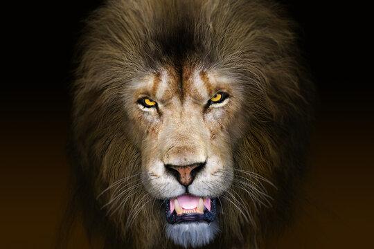 険しい表情の雄ライオンの正面顔