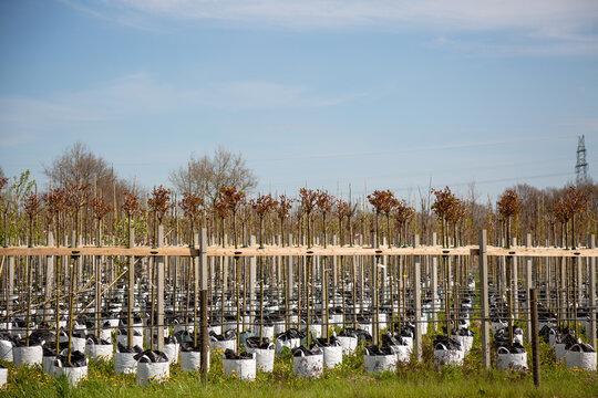 Baumschule mit vielen Bäumen