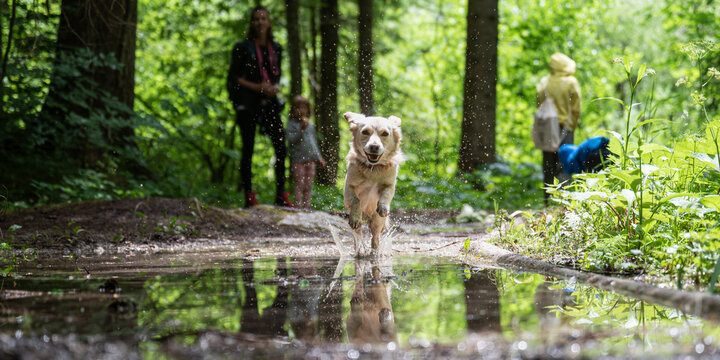 Cute happy dog running through a puddle