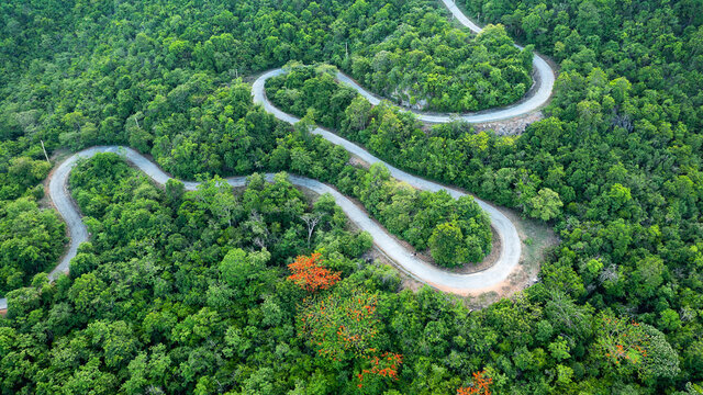 Beautiful winding road in forest lined with green and orange trees, Phetchaburi, Thailand.