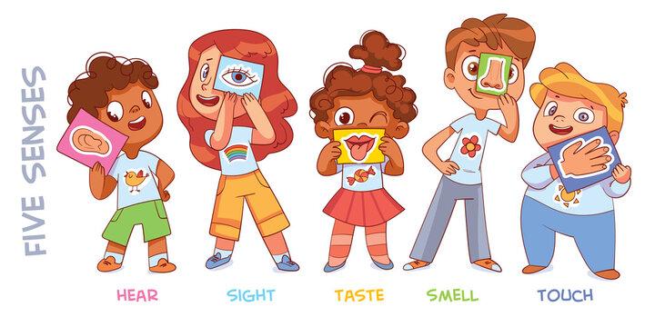 Five senses. Sight, hear, smell, taste, touch
