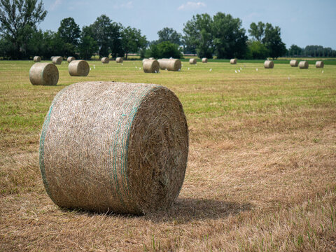 Many Bales of Hay in the Countryside in Spring Time in Italy