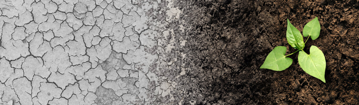 Climate change cycle as a dried or dry cracked land suffering from drought turning into rich moist organic earth with a growing young plant as a composite.