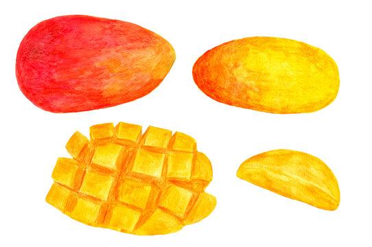 マンゴーの水彩イラスト