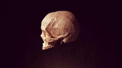 Obraz Skull Head Dead Bone Skeleton Anatomy Halloween 3d illustration render - fototapety do salonu