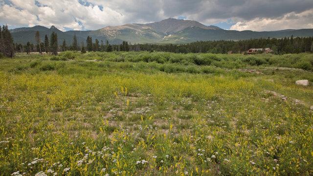 Colorado summer flowers at Longs Peak