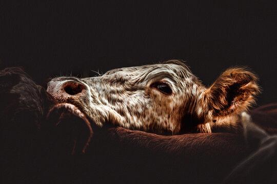 Rebanho de vacas