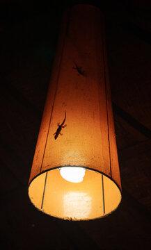 gecko buscando alimento que atrae la luz en medio de la noche