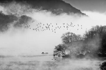 철새가 나르는 안개낀 호수의 아침 - 447422091
