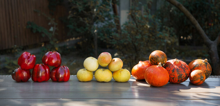 autumn harvest. organically grown peppers, pumpkin, apples in an assortment. Vitamin set of fresh and mouth-watering vegetables. Happy thanksgiving day.