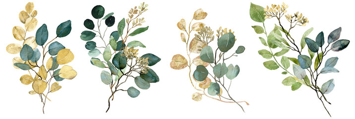 Fototapeta Watercolor green and gold seeded Eucalyptus bouquets. Spring greenery. Wedding floral illustration. obraz