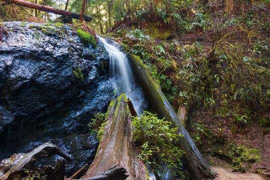 Waterfall in Mendocino. Northern California Redwoods.